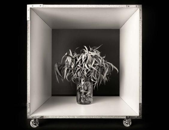 Eucalipto | Pepe Avilés | Fotografía digital, impresión en papel fotográfico con base de barita a chorro de tinta | 28x21,5 cm | 2020 | 150 USD